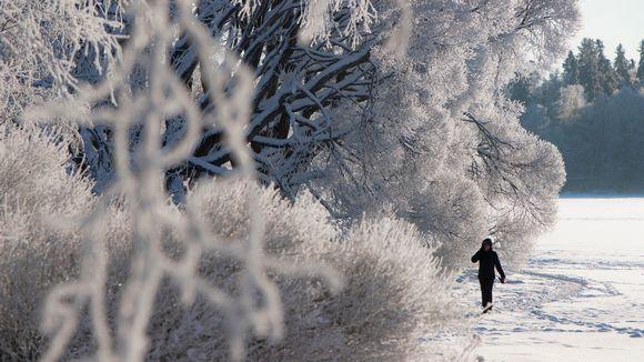 Talvi talvimaisema pakkanen kuura arboretum tampere luonto ulkoilu lenkkeily