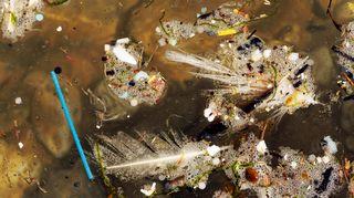 mikromuovia vedessä