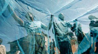 Sambialaisia tutkimassa uusia kehitysapuna saatuja hyönteisverkkoja