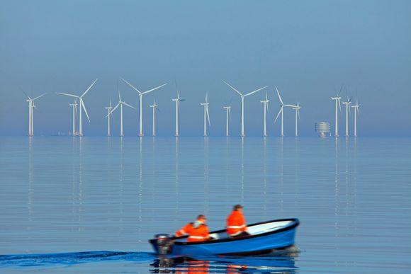 Tuulivoimaloita Lillgrundissa, Ruotsissa.