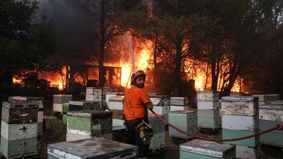 Palomies sammutti tiistaina maastopaloa Ateenan lähettyvillä Varymbombissa.