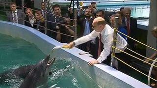 Venäjän presidentti Vladimir Putin syöttää delfiinejä.