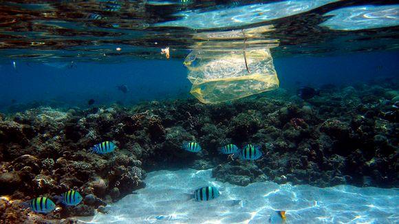 Muovipussi valokuvattuna Punaisessameressa, Egyptin rannikolla.