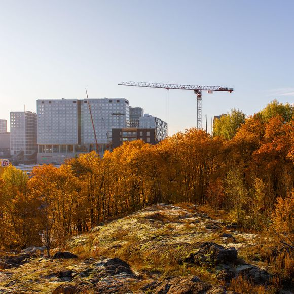 Poll: most Finns want government to curb urbanisation