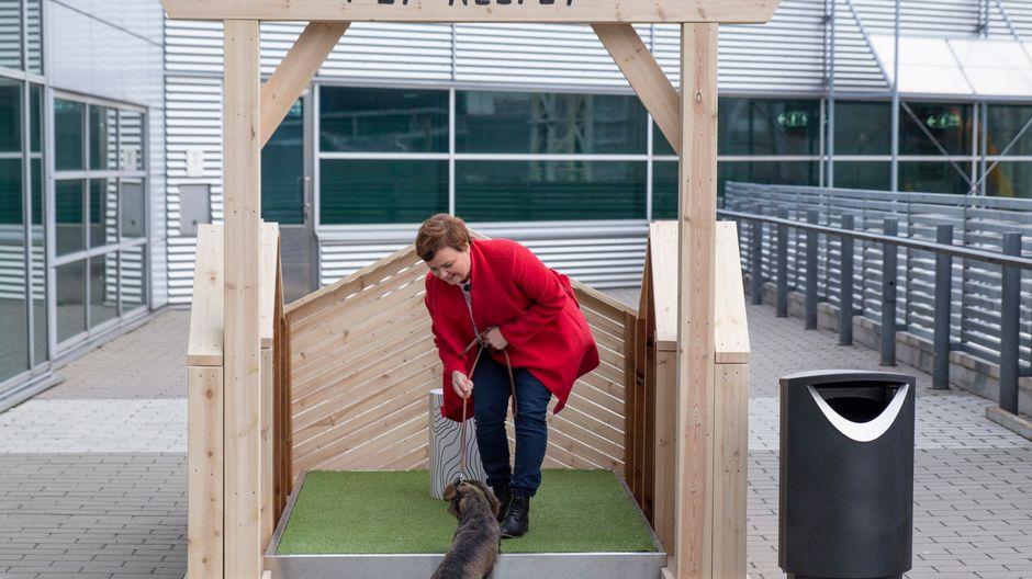 Toimittaja Tuulia Thynell pissattaa Mimmi-koiraansa Helsinki-Vantaan lentoaseman koiravessassa.