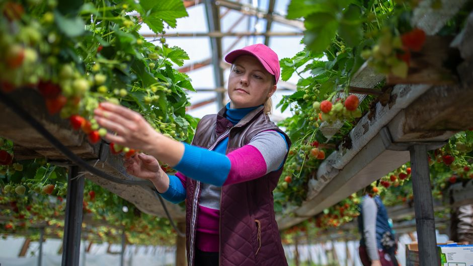 Минтруда планирует организовать чартеры для доставки в страну сезонных сельхозработников с Украины