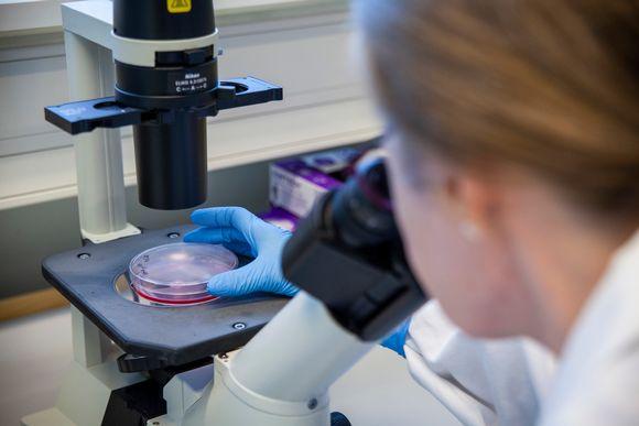 Laboratoriomestari Eila Korhonen tutkii soluviljelmää.