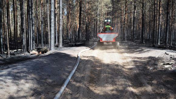 Palomies ajaa mönkijällä palaneen metsän keskellä.