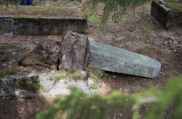 Kaadettu hautakivi Juutalaisten hautausmaalla Haminassa.
