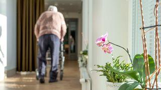 Vanhus kävelee rollaattorilla.