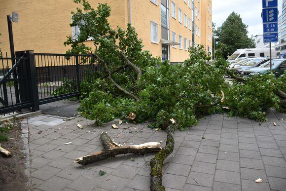 Jalkakäytävälle myrskyssä pudonnut puunoksa.