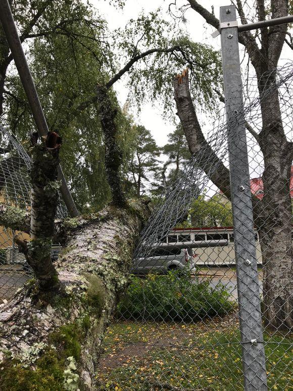 Myrsky katkoi puun Pyynikin Palomäentien kentälle torstaina.