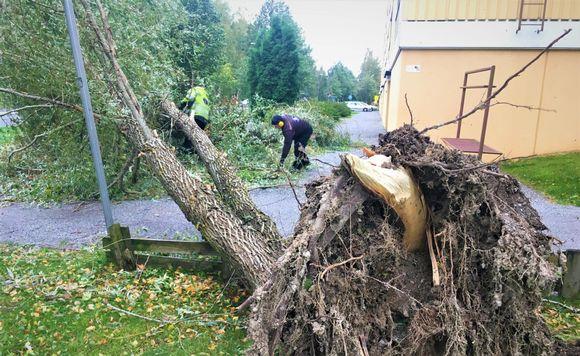 Puiden raivausta Vaasassa Aila-myrskyn jälkeen