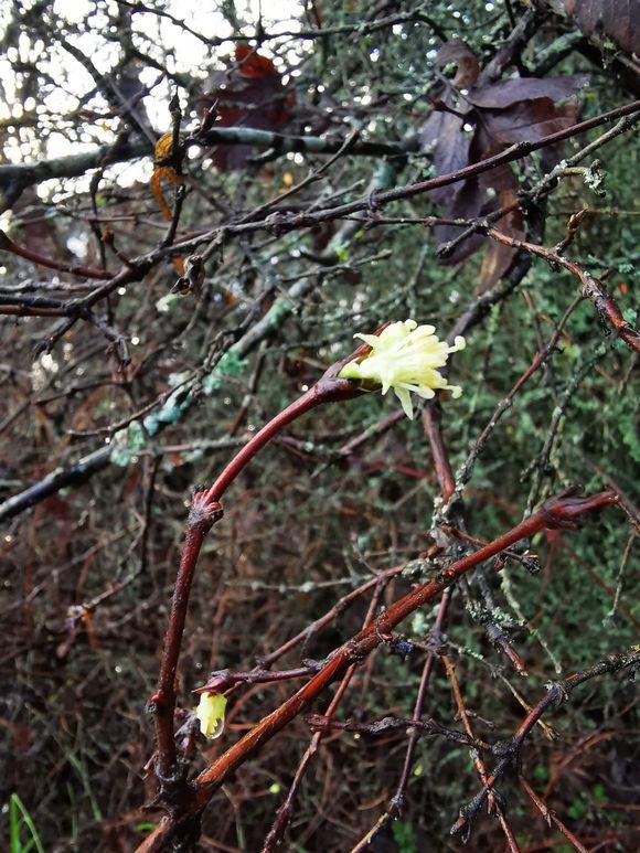 Puu kukkii talvella.