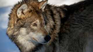 Video: Susi Ähtärin eläinpuistossa