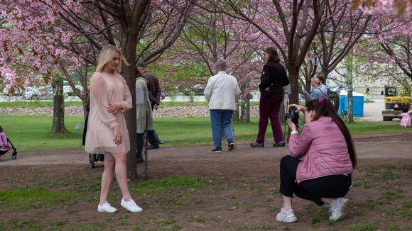 Nainen ottaa valokuvan toisesta naisesta Roihuvuoren kirsikkapuistossa.