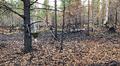 Video: Sodankylän Kaitamaalla tehdään hyöntesikartoituksia.