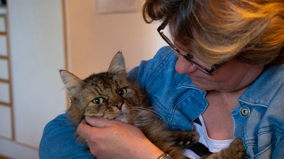 Valtteri-kissa omistajansa Nina Hirsiahon sylissä